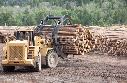 A row of logs at a lumber mill in the interior of British Columbia, Canada. Lumber or logging industry theme. A powerful log hauling machine at a plywood plant.
