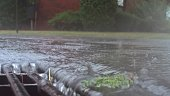 During a heavy rain falling on the street and flowing through sewer drain