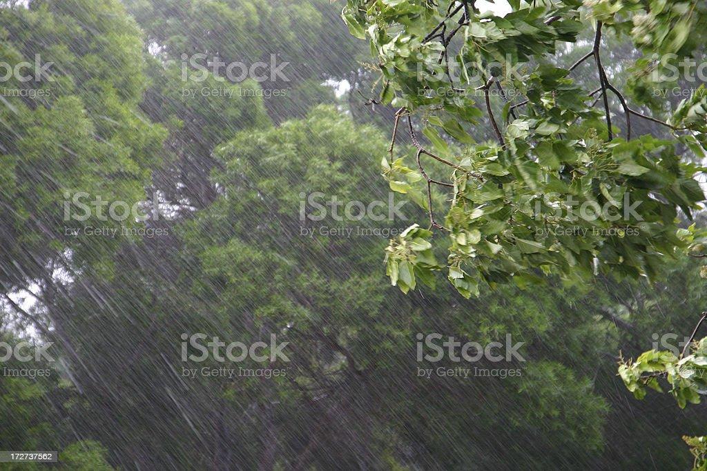 Heavy rain (close-up) royalty-free stock photo