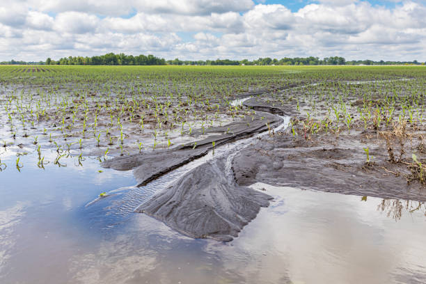 Heavy rains and storms in the Midwest have caused field flooding and corn crop damage sunny day with large clouds eroded stock pictures, royalty-free photos & images