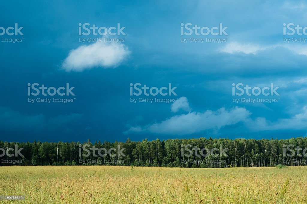 Heavy sky behind forest stock photo