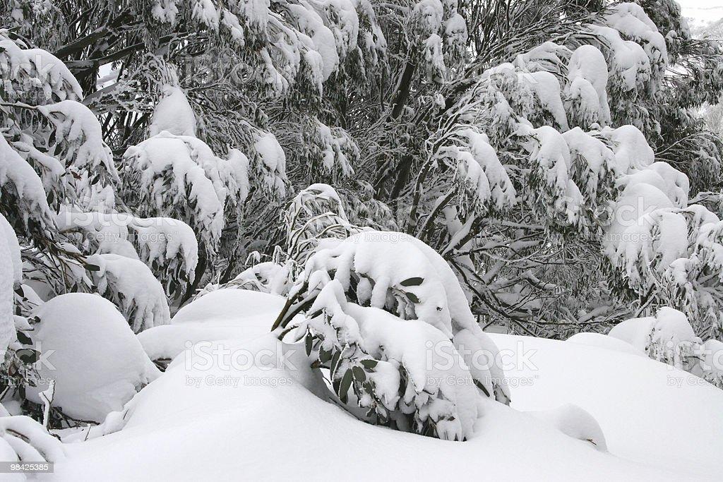 La neve sui rami foto stock royalty-free