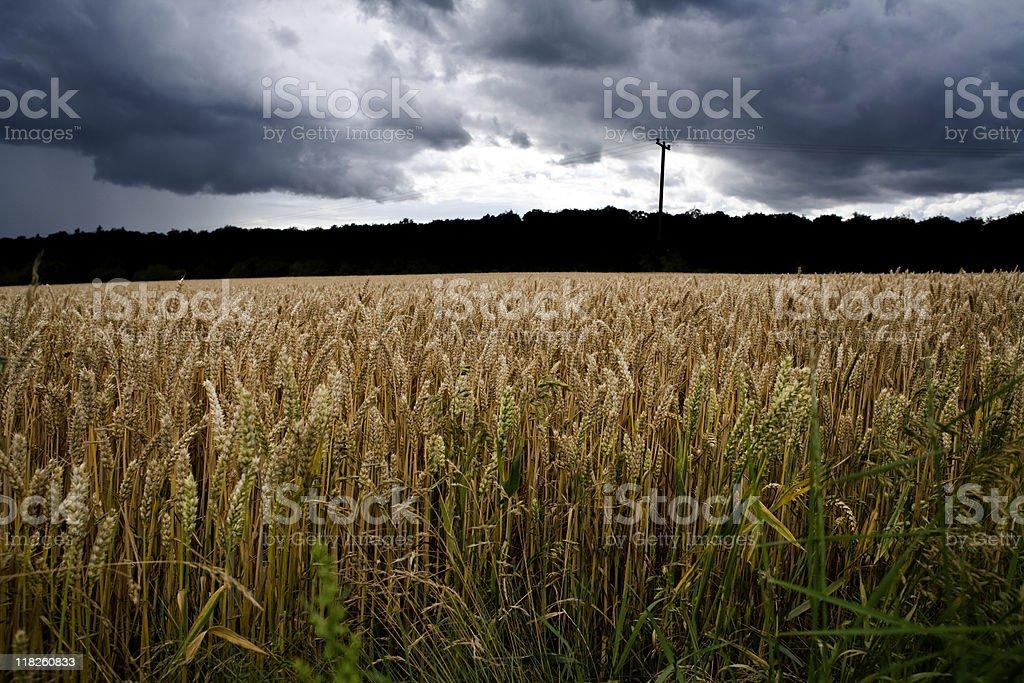 Schwere Gewitter nähern wheat field – Foto