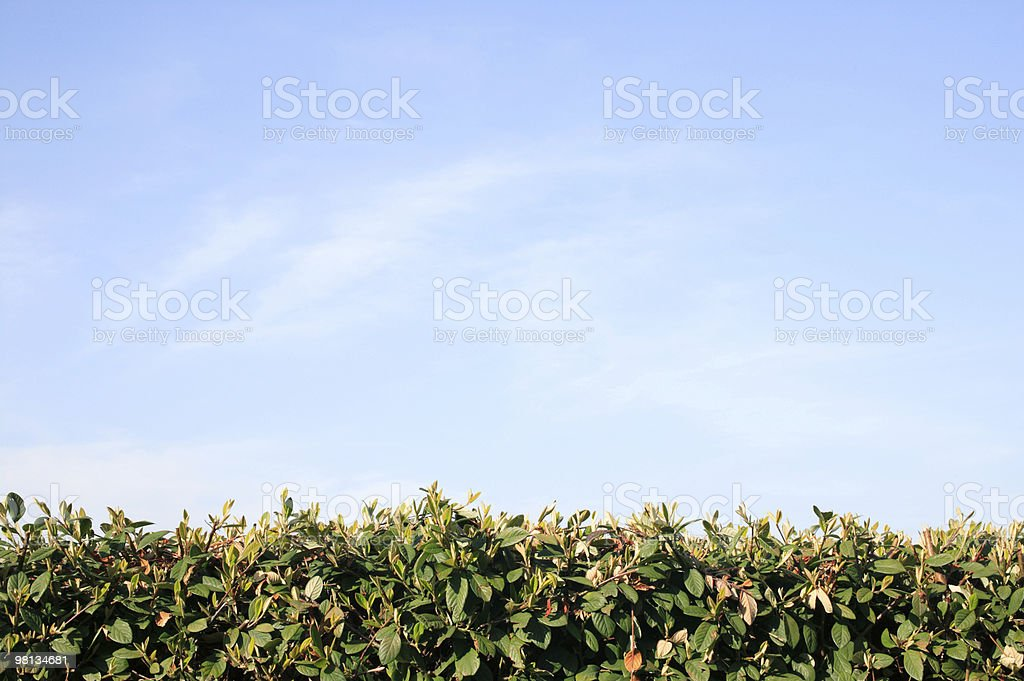 Hedge And Sky Background royalty-free stock photo