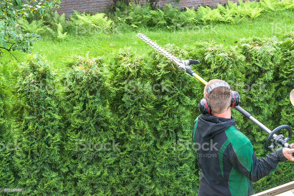 Hedge cutting petrol hedge trimmer. stock photo