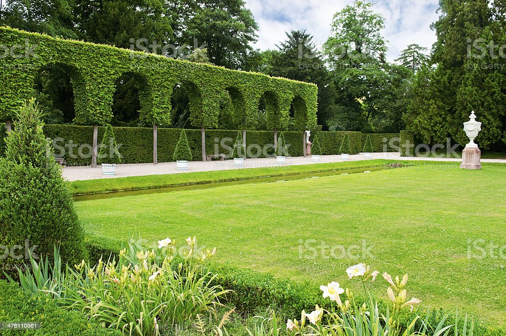 hedge in a summer park royalty-free stock photo