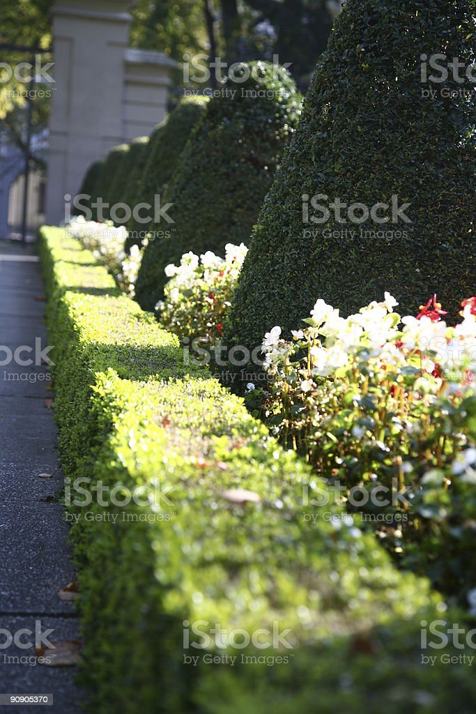 Hedge in the park royalty-free stock photo