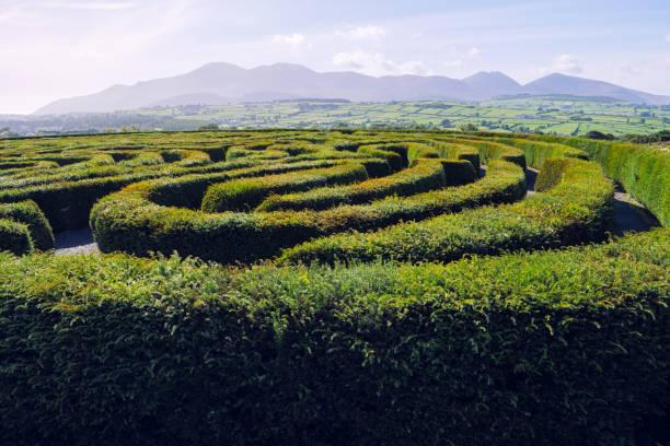 heckenlabyrinth gegen blauen himmel, nordirland - labyrinth stock-fotos und bilder