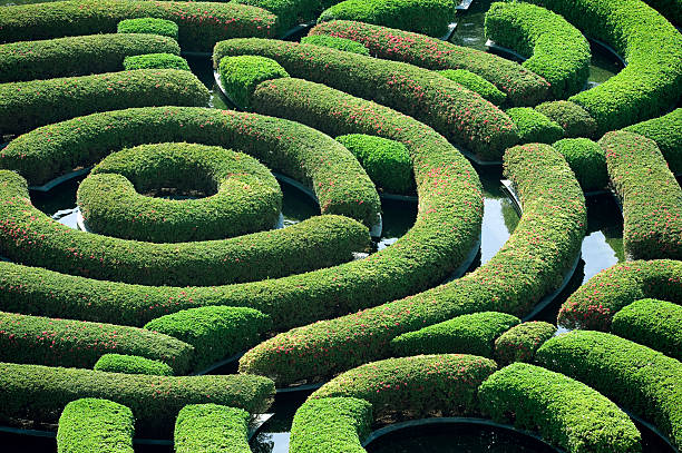 hedge maze - maze stock photos and pictures