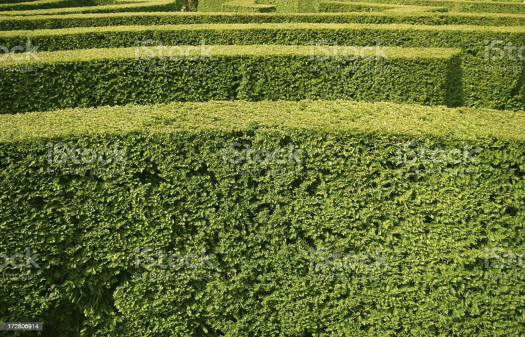 Hedge Maze royalty-free stock photo