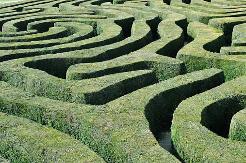 A abstract view of a labyrinth maze of green clipped topiary hedges and pathways