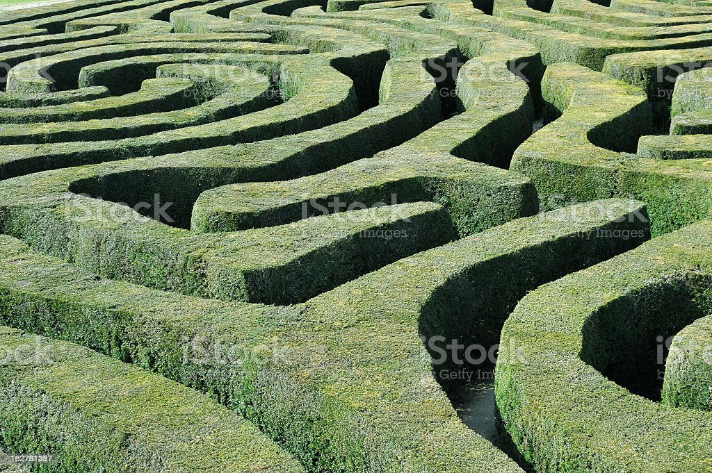 Hedge maze stock photo