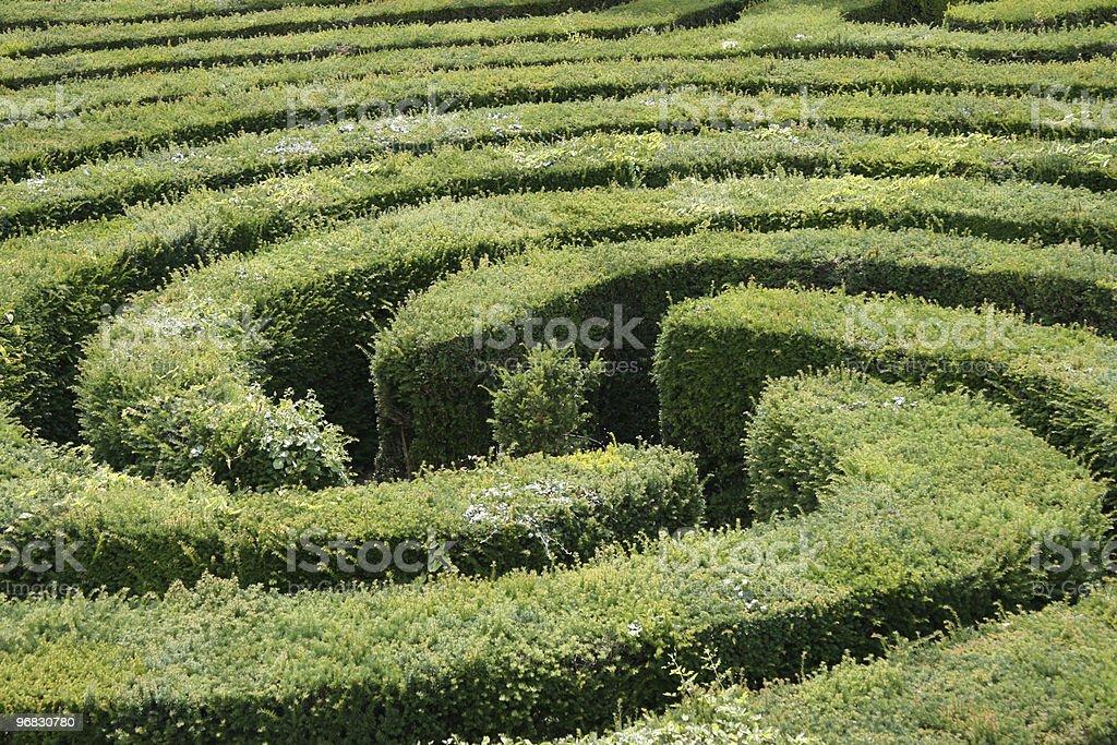 Hedge Maze Three royalty-free stock photo