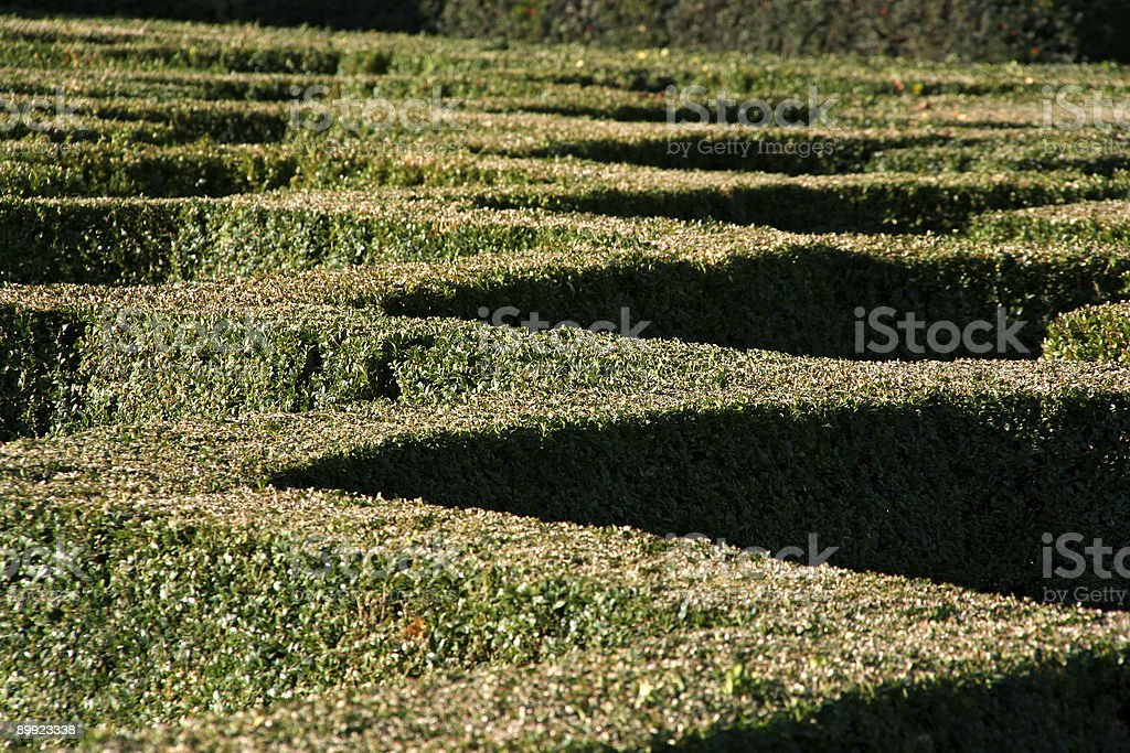 Hedge Pattern royalty-free stock photo