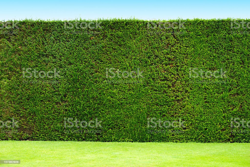hedge royalty-free stock photo