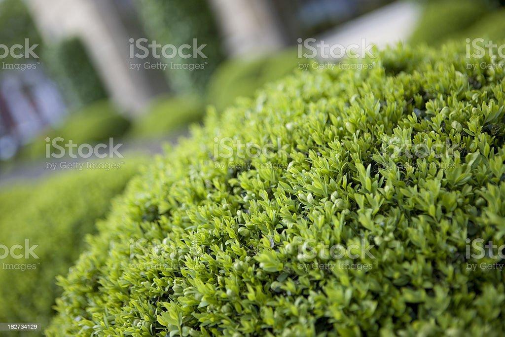 Hedge stock photo
