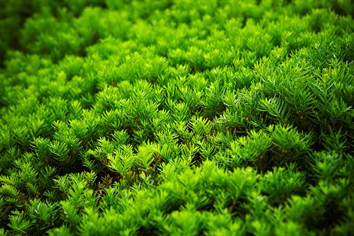 Hedge Planten Stockfoto en meer beelden van Blad