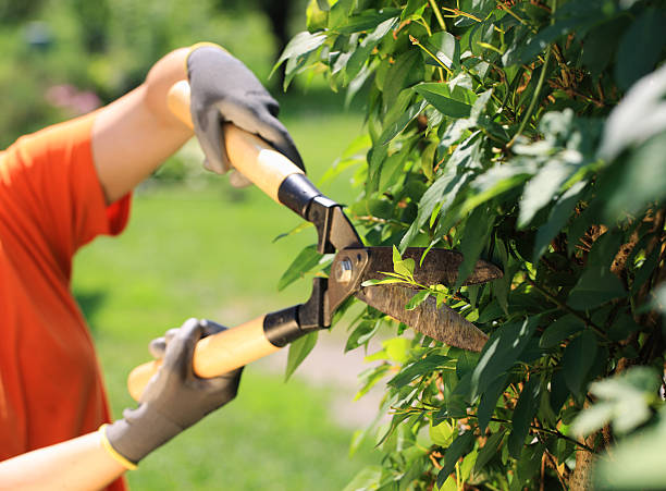 Hedge Trimming A gardener cutting a hedge in the garden, hands close up hedge clippers stock pictures, royalty-free photos & images