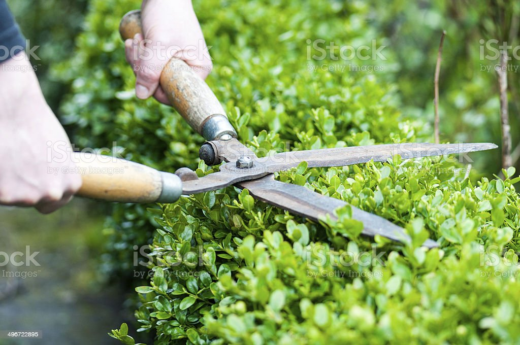 Hedge Trimming stock photo