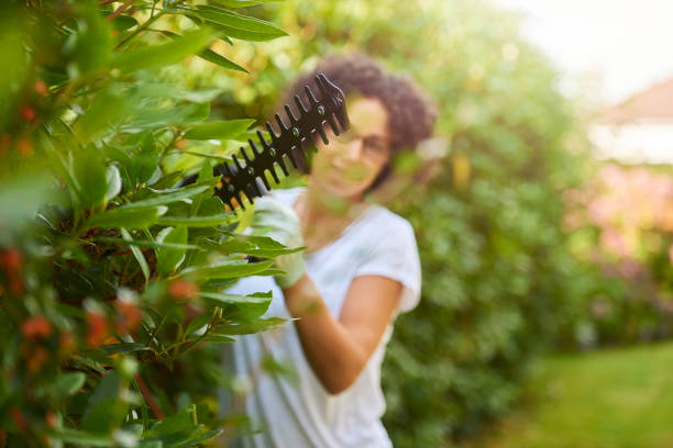 hedge trimming a young woman trims the bushes in the garden hedge clippers stock pictures, royalty-free photos & images