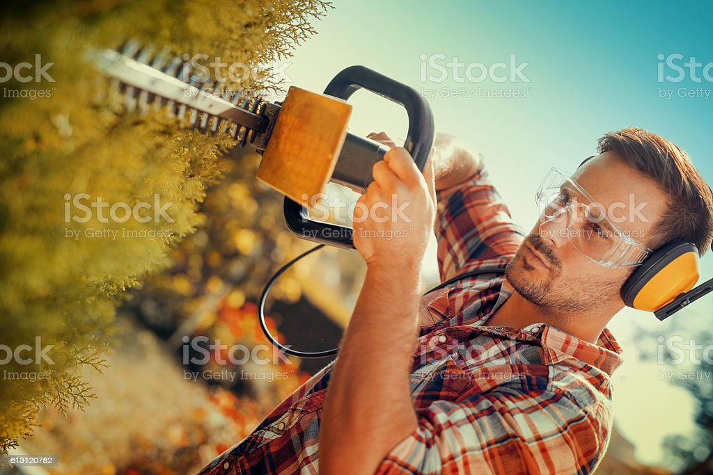 Hedge trimming,works in a garden. stock photo