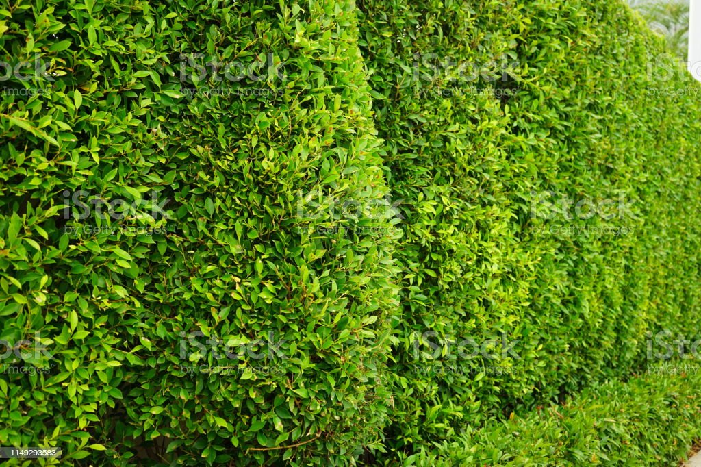 Forest, Woodland, Springtime, Summer, Lush Foliage