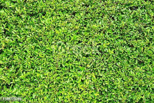 Leaf, Environmental Conservation, Green Color, Wall - Building Feature, Surrounding Wall