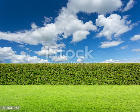 istock hedge with sky and grass 524031284