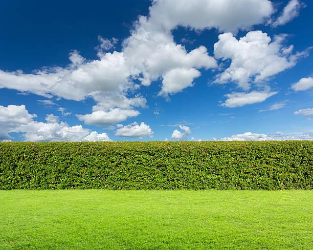 hecke mit himmel und gras - der geheime garten stock-fotos und bilder