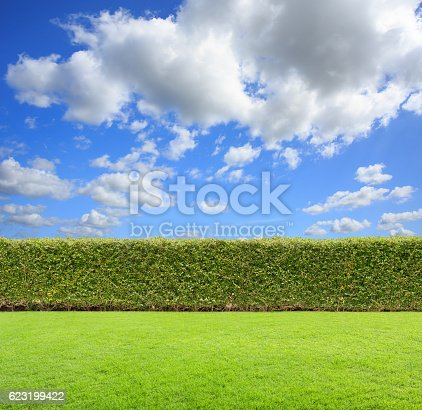 istock hedge with sky and grass 623199422
