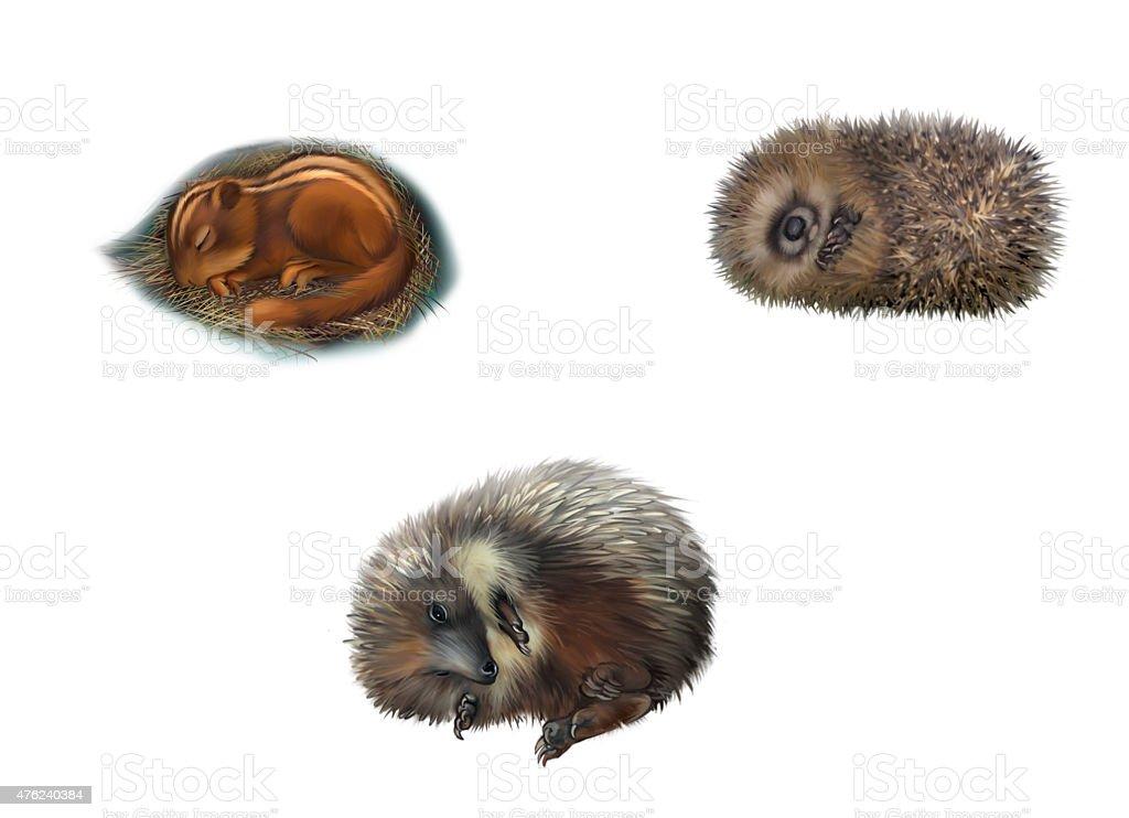 Hedgehog , chipmonk sleeping stock photo