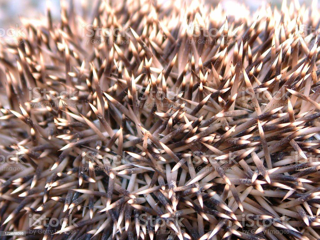 Hedgehog Spikes royalty-free stock photo