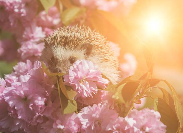Igel mit Blumen – Foto