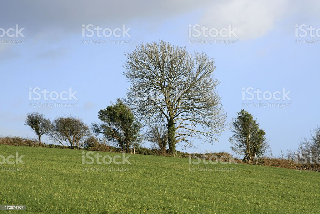 Hedgerow, field, trees in County Cork, Ireland stock photo