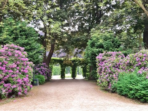 Hedges and rhododenron in Hamburg's Sadtpark