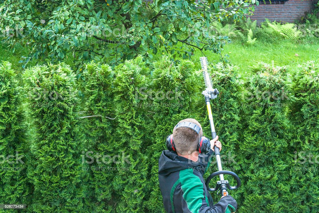 Hedges cutting stock photo