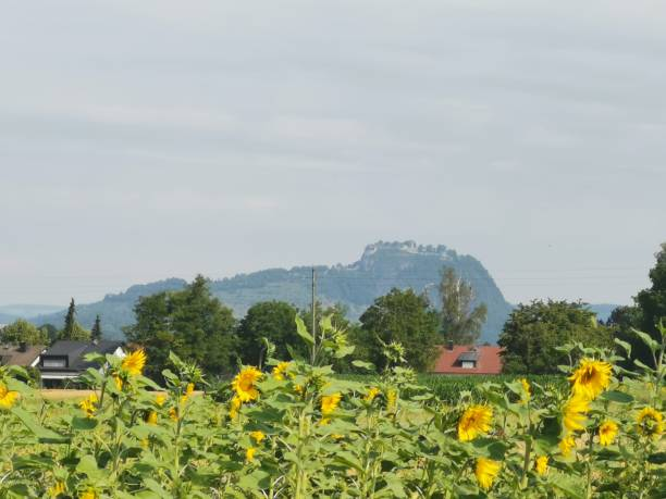 Hegau volcano Hohentwiel near city of Singen during hot july day Mobile Shot singen stock pictures, royalty-free photos & images