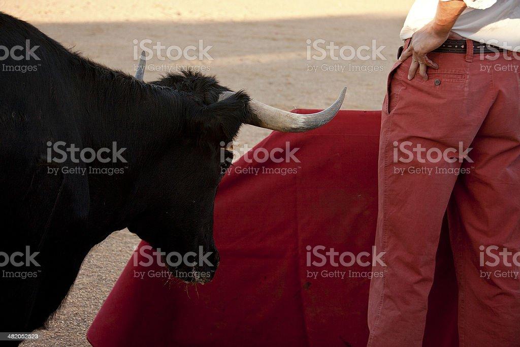 Heifer standing close stock photo