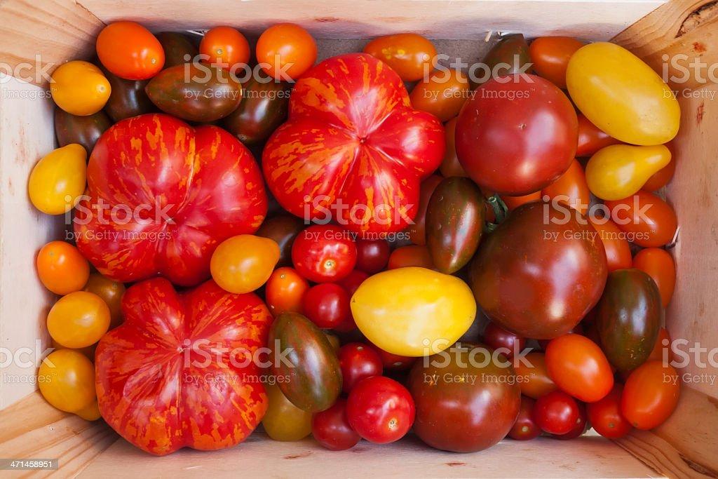 Heirloom tomato cultivars stock photo