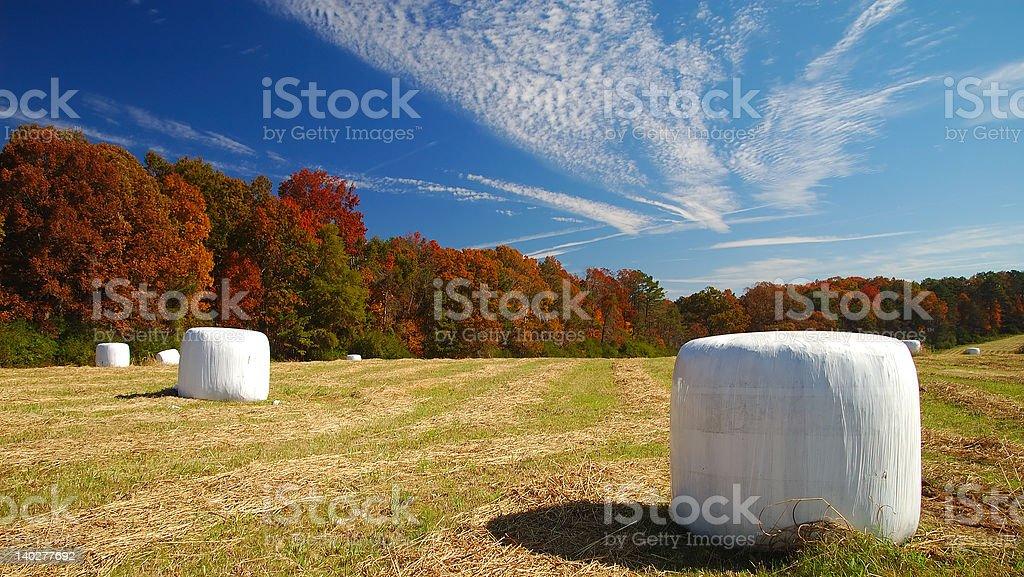 Helen's Farm At Fall Season royalty-free stock photo