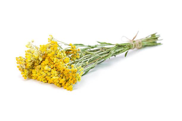 Helichrysum arenarium Bund – Foto