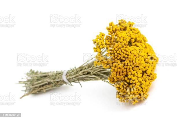 Photo of Helichrysum flowers