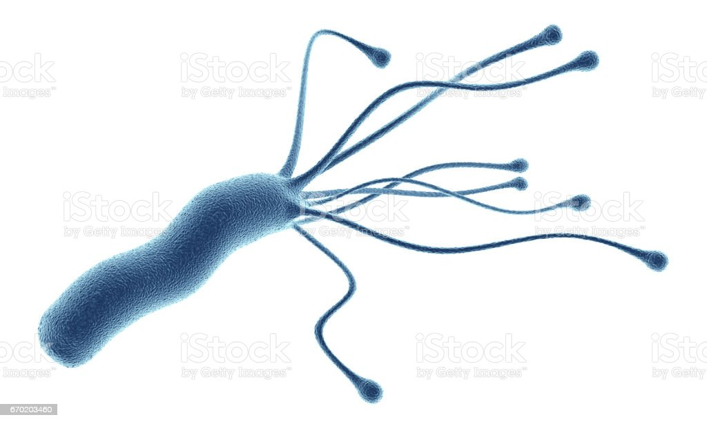 Helicobacter Pylori bacterium isolated on white background stock photo