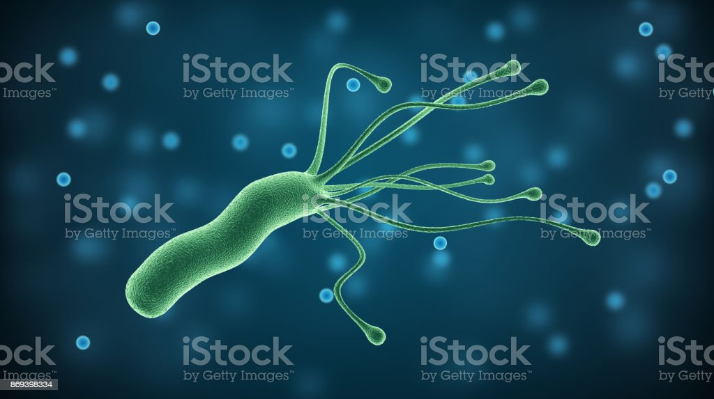 Helicobacter Pylori bacterium, medical illustration pathogenic microorganism in human stomach stock photo