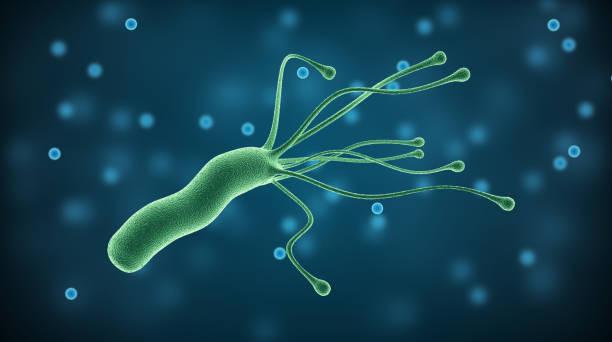 helicobacter pylori bakterium, medizinische illustration pathogene mikroorganismen im menschlichen magen - einzeller mikroorganismus stock-fotos und bilder