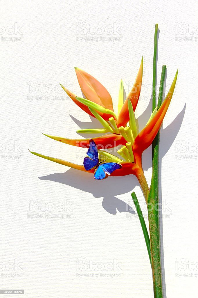 Heliconia And Butterfly. Hi Res. stock photo