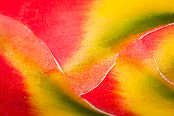 Heliconia backgrounds stock photo