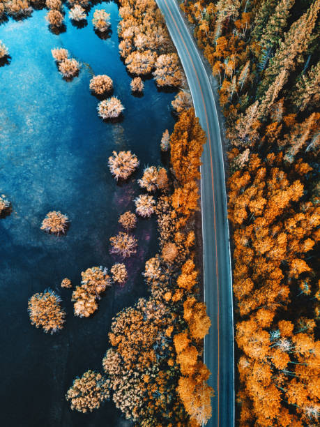 helicopter view of the pine forest along a lake stock photo