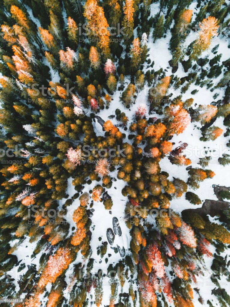 helicopter view of the pine forest stock photo