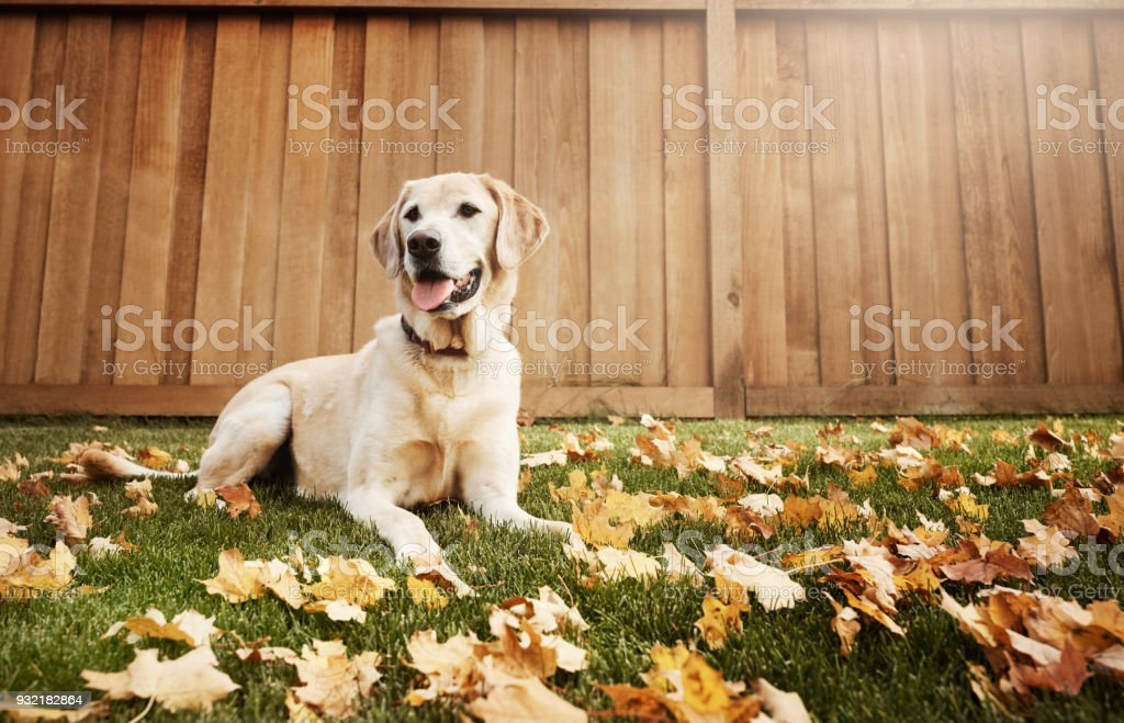 He'll soon become your best furry friend stock photo